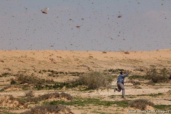 tph locusts
