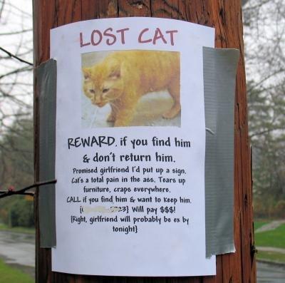 tph lost cat