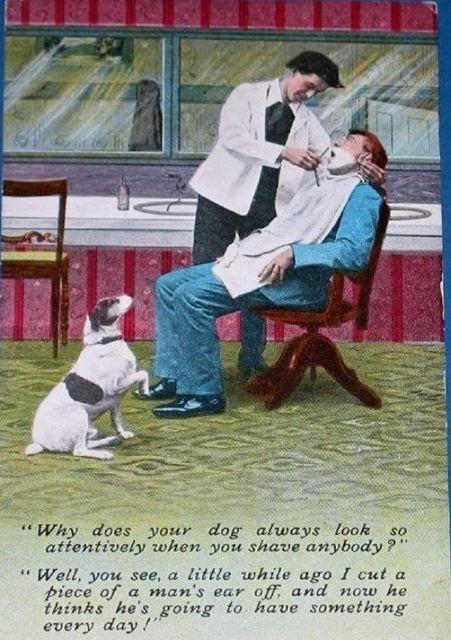 tph barber dog