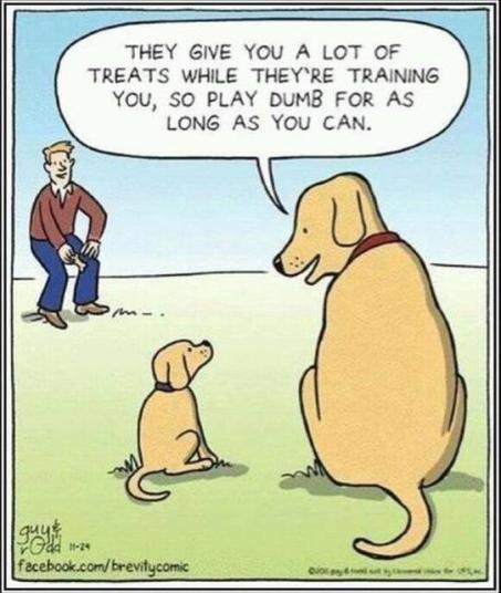 tph obedience dog_training_cartoon