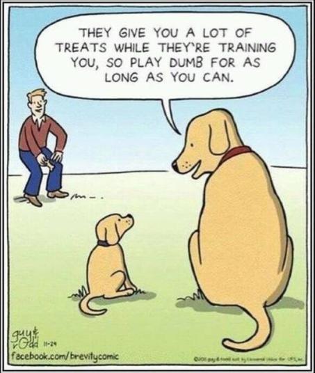tph obedience dog_training_cartoon