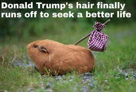 tph trump hair