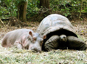 tph Hippo Tort
