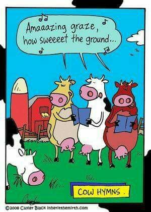 tph cow hymns