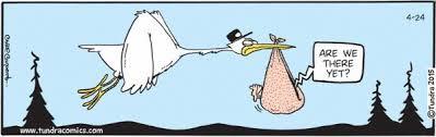tph stork
