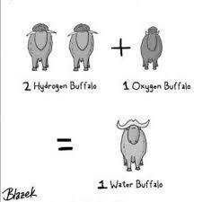 tph water buffalo