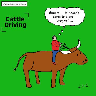 tph cattle driving